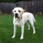Oscar in new garden