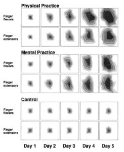 piano study brain scans